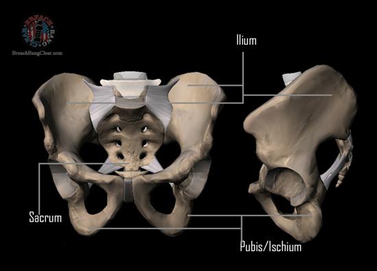Ammo stopping power vs anatomy Cowan Breach Bang Clear pelvic bone