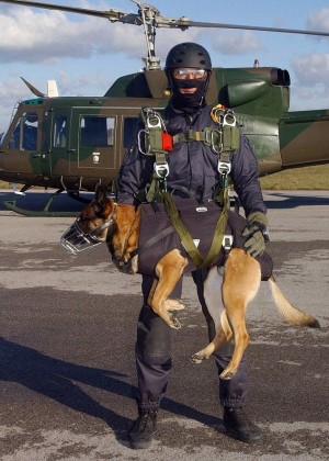 2432CEBF00000578 0 image a 23 1419174145103 300x420 Spanish SF soldiers and their dogs take part in tandem parachute freefall