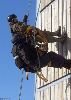 2432CEC300000578 2882621 image a 24 1419174718005 300x420 Spanish SF soldiers and their dogs take part in tandem parachute freefall