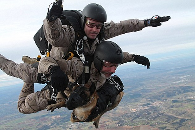 spanish sof parachute free fall norway 2014 631x420 Spanish SF soldiers and their dogs take part in tandem parachute freefall